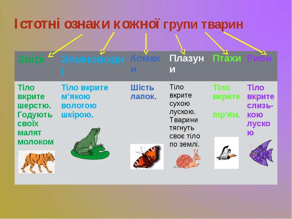 Істотні ознаки кожної групи тварин Звірі Земноводні Комахи Плазуни Птахи Риби...