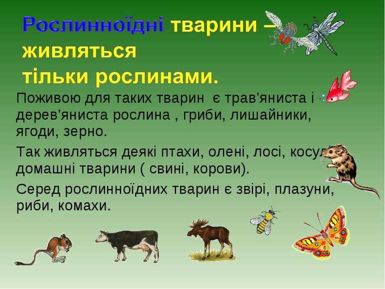 Поживою для таких тварин є трав'яниста і дерев'яниста рослина , гриби, лишайн...