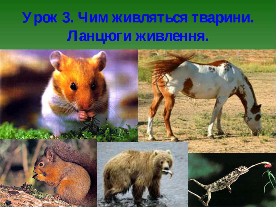 Урок 3. Чим живляться тварини. Ланцюги живлення.