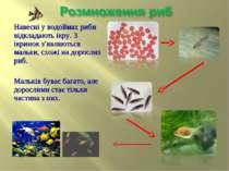 Навесні у водоймах риби відкладають ікру. З ікринок з'являються мальки, схожі...