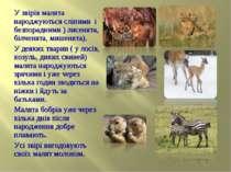 У звірів малята народжуються сліпими і безпорадними ) лисенята, білченята, ми...