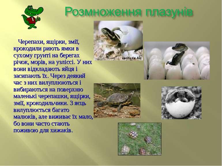 Черепахи, ящірки, змії, крокодили риють ямки в сухому грунті на берегах річок...