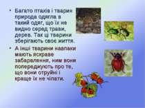 Багато птахів і тварин природа одягла в такий одяг, що їх не видно серед трав...
