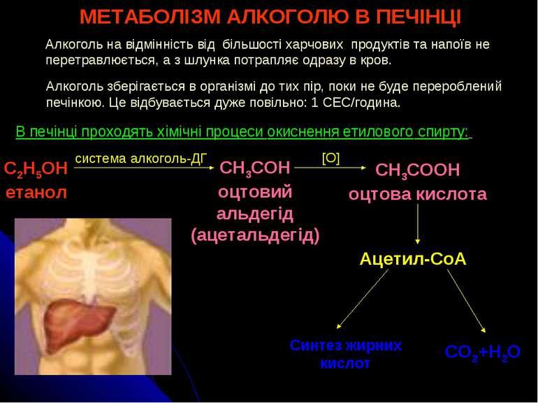 МЕТАБОЛІЗМ АЛКОГОЛЮ В ПЕЧІНЦІ Алкоголь на відмінність від більшості харчових ...