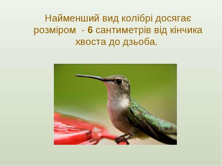 Найменший вид колібрі досягає розміром - 6 сантиметрів від кінчика хвоста до ...