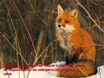 Виявляється, в організмі тварин є особливі години, які відраховують час незал...