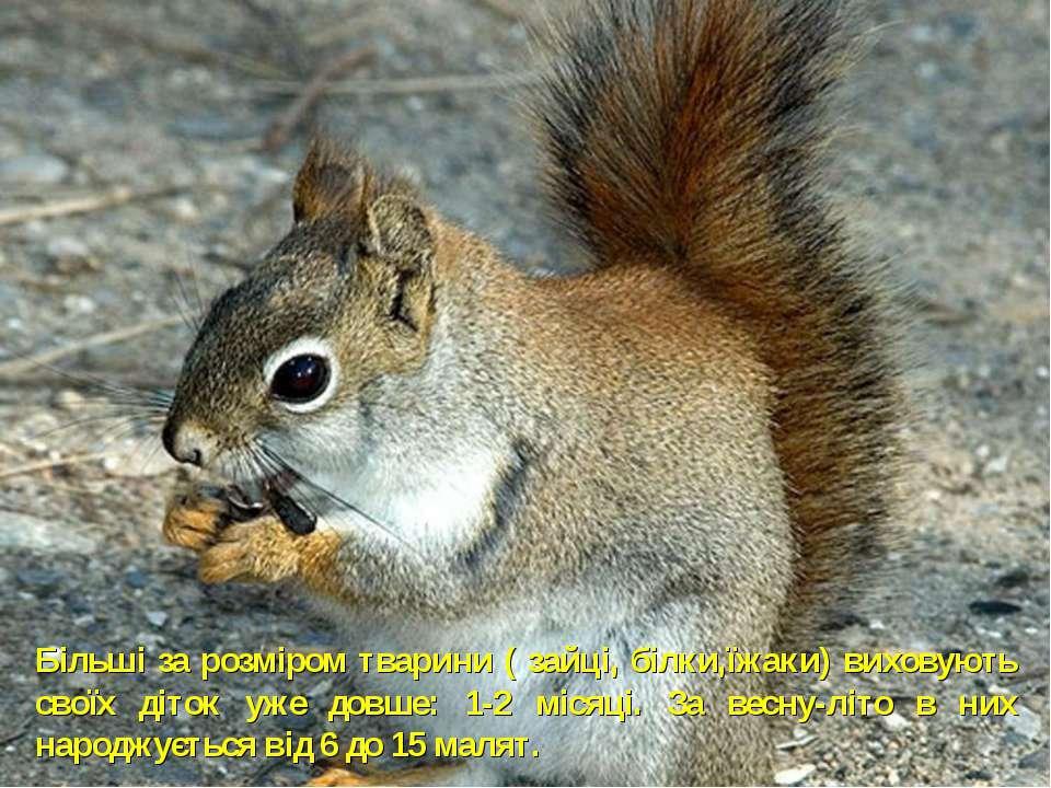 Більші за розміром тварини ( зайці, білки,їжаки) виховують своїх діток уже до...