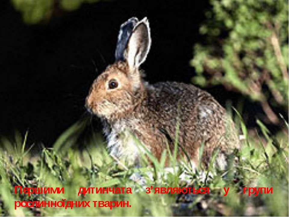 Першими дитинчата з'являються у групи рослинноїдних тварин.