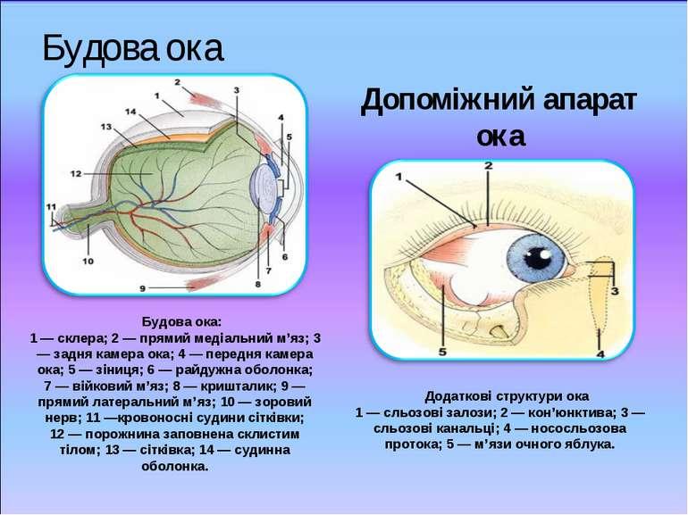 Будова ока Допоміжний апарат ока Будова ока: 1 — склера; 2 — прямий медіальни...