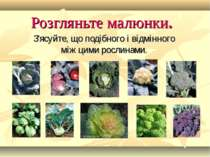 Розгляньте малюнки. З'ясуйте, що подібного і відмінного між цими рослинами.