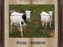 Коза - козеня