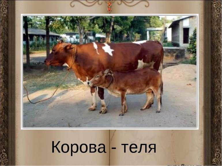 Корова - теля