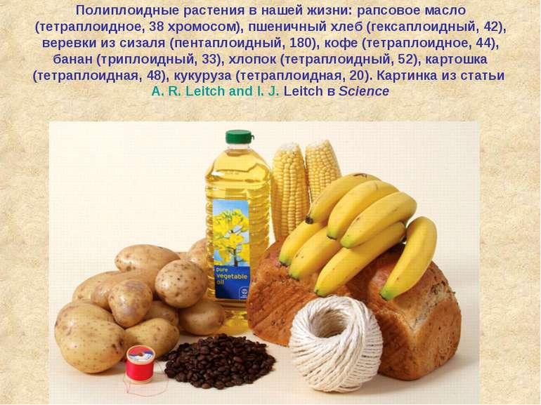 Полиплоидные растения в нашей жизни: рапсовое масло (тетраплоидное, 38хромос...
