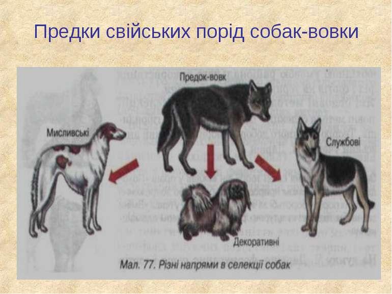 Предки свійських порід собак-вовки