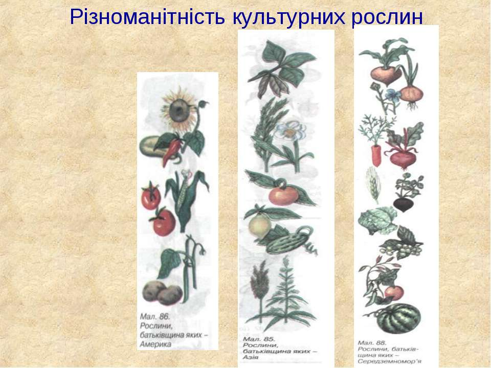 Різноманітність культурних рослин