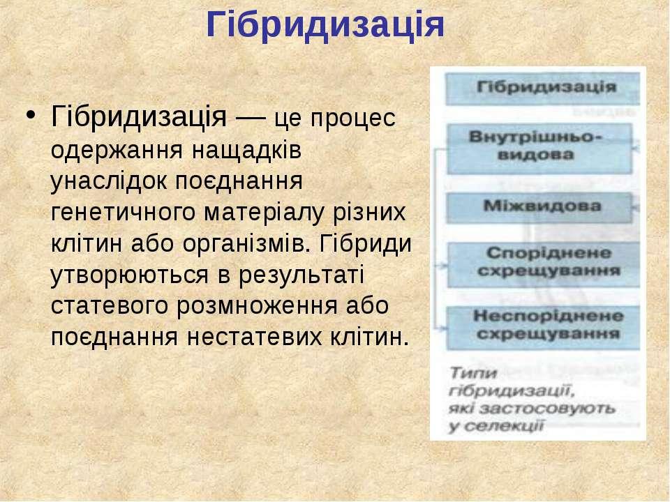 Гібридизація Гібридизація — це процес одержання нащадків унаслідок поєднання ...
