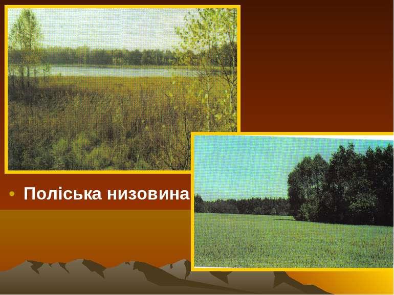Поліська низовина