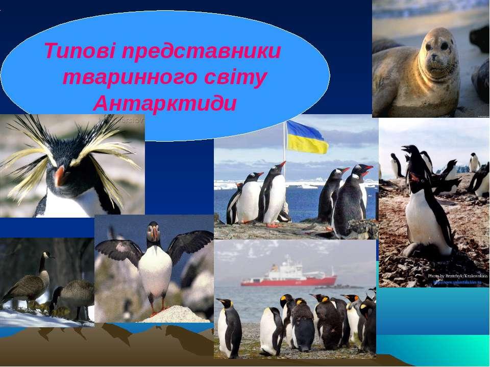 Типові представники тваринного світу Антарктиди