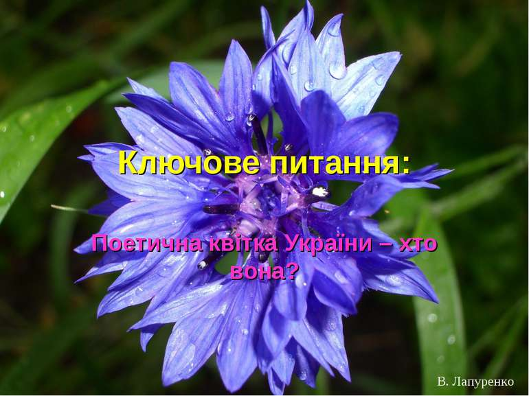 Ключове питання: Поетична квітка України – хто вона? В. Лапуренко