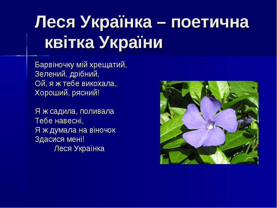 Леся Українка – поетична квітка України Барвіночку мій хрещатий, Зелений, дрі...