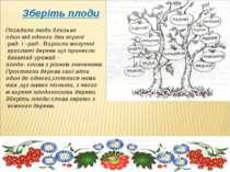 Зберіть плоди Посадили люди близько один від одного два корені -рад- і –рад-....