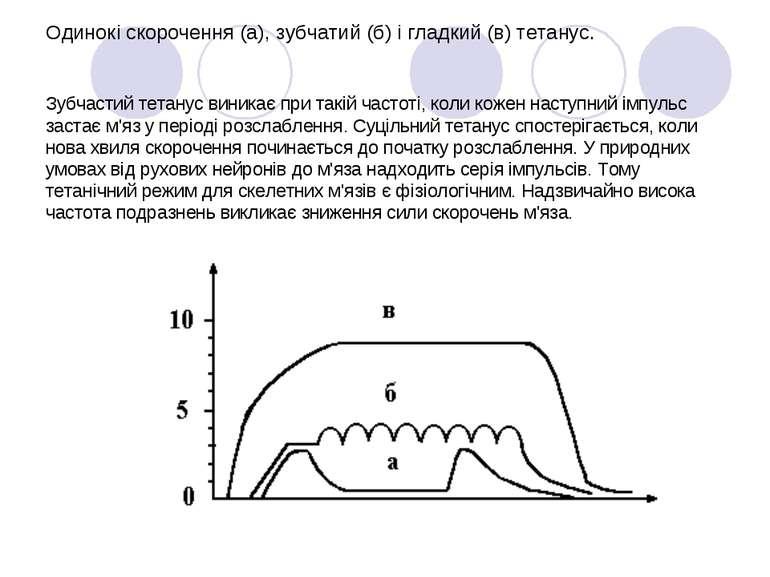 Одинокі скорочення (а), зубчатий (б) і гладкий (в) тетанус.  Зубчастий тетан...