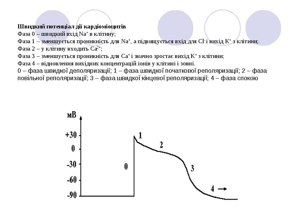 Швидкий потенціал дії кардіоміоцитів Фаза 0 – швидкий вхід Na+ в клітину; Фаз...