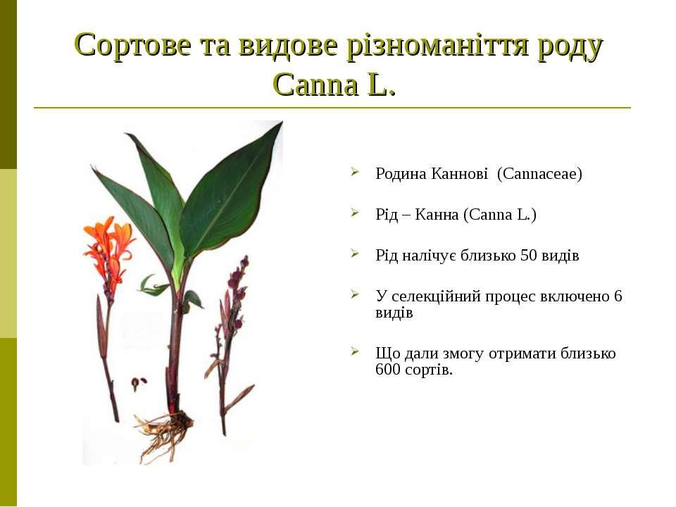 Сортове та видове різноманіття роду Canna L. Родина Каннові (Саnnасеае) Рід –...
