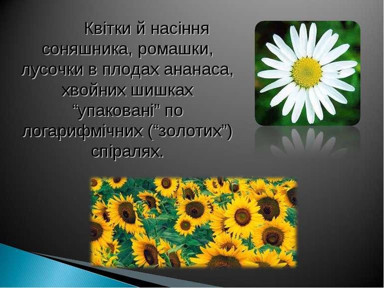 Квітки й насіння соняшника, ромашки, лусочки в плодах ананаса, хвойних шишках...