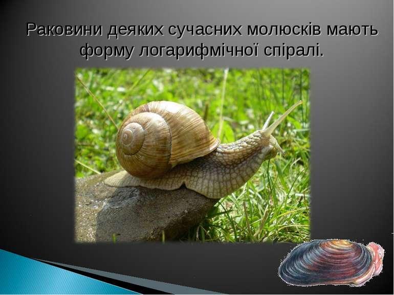 Раковини деяких сучасних молюсків мають форму логарифмічної спіралі.