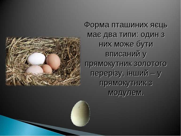 Форма пташиних яєць має два типи: один з них може бути вписаний у прямокутник...