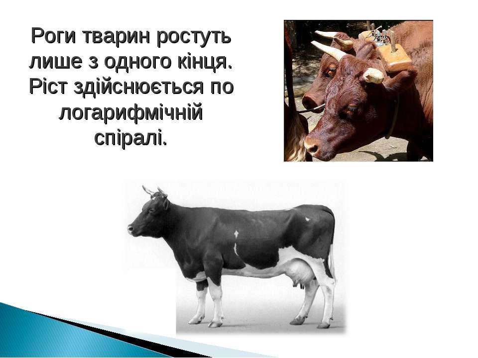 Роги тварин ростуть лише з одного кінця. Ріст здійснюється по логарифмічній с...