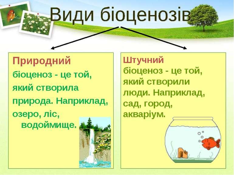 Природний біоценоз - це той, який створила природа. Наприклад, озеро, ліс, во...