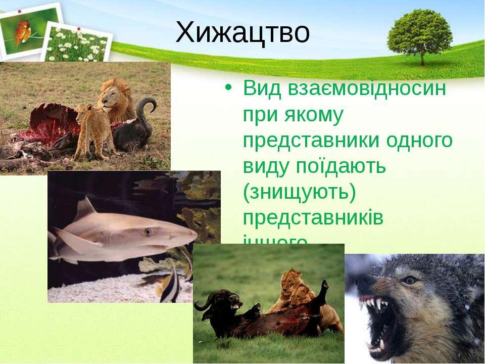 Хижацтво Вид взаємовідносин при якому представники одного виду поїдають (знищ...