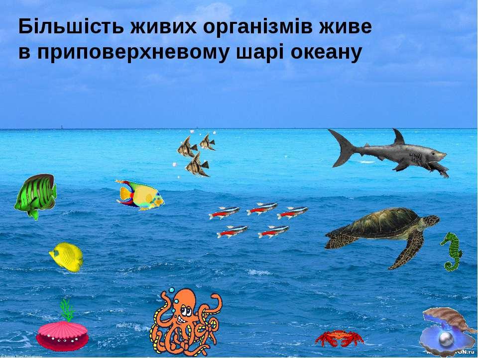 Більшість живих організмів живе в приповерхневому шарі океану