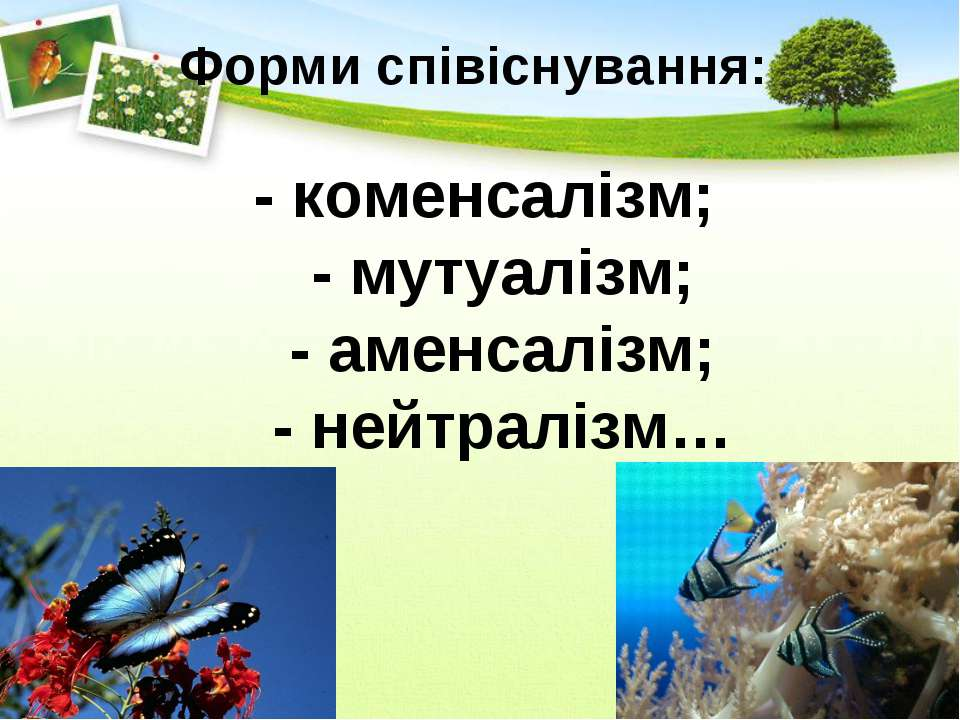 Форми співіснування: - коменсалізм; - мутуалізм; - аменсалізм; - нейтралізм…