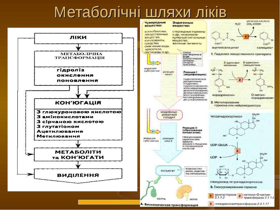 Метаболічні шляхи ліків