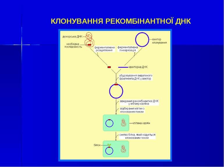 КЛОНУВАННЯ РЕКОМБІНАНТНОЇ ДНК