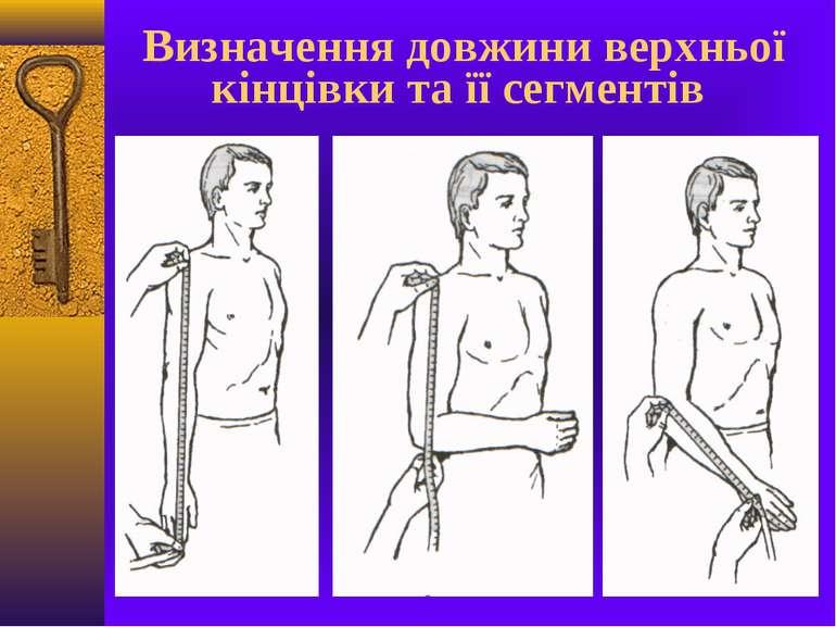 Визначення довжини верхньої кінцівки та її сегментів