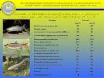 Економічна ефективність вирощування цьоголіток коропа у вирощувальних ставах ...