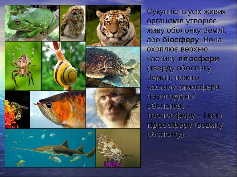 Сукупність усіх живих організмів утворює живу оболонку Землі, або біосферу. В...