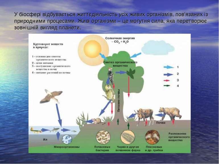 У біосфері відбувається життєдіяльність усіх живих організмів, пов'язаних із ...