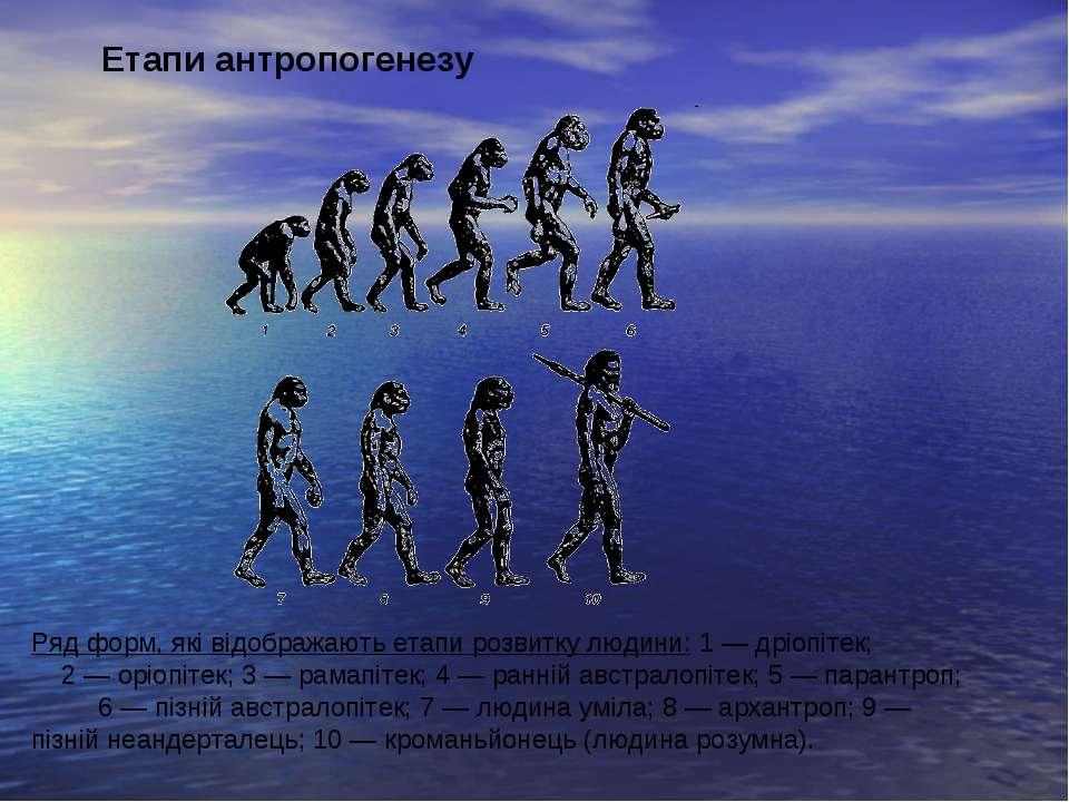 Ряд форм, які відображають етапи розвитку людини: 1 — дріопітек; 2 — оріопіте...