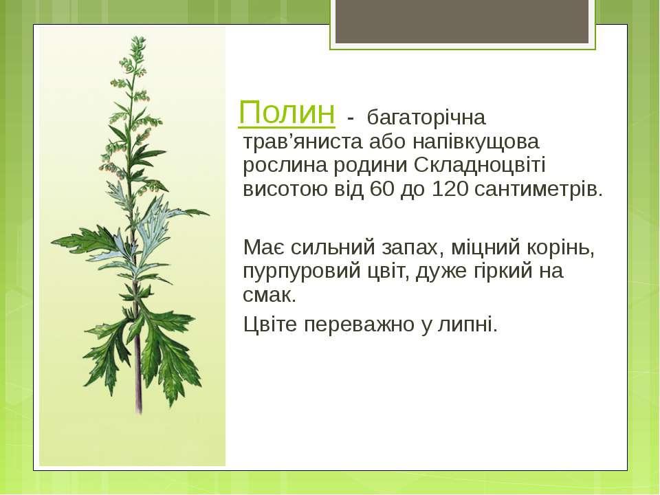 Полин - багаторічна трав'яниста або напівкущова рослина родини Складноцвіті в...
