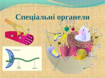 Спеціальні органели