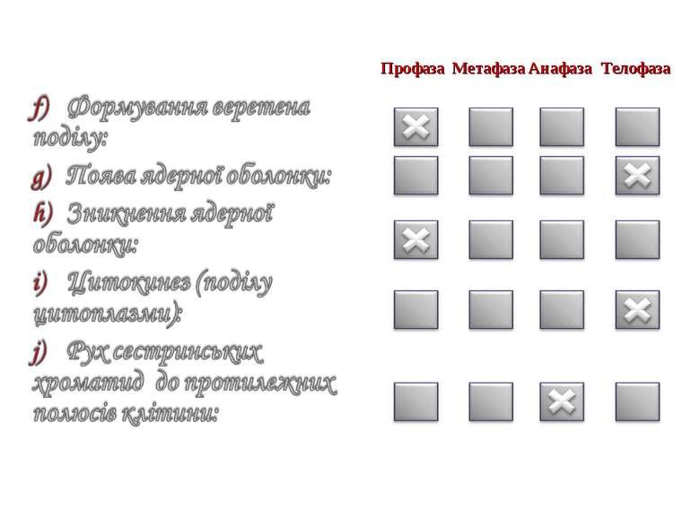 Профаза Метафаза Анафаза Телофаза