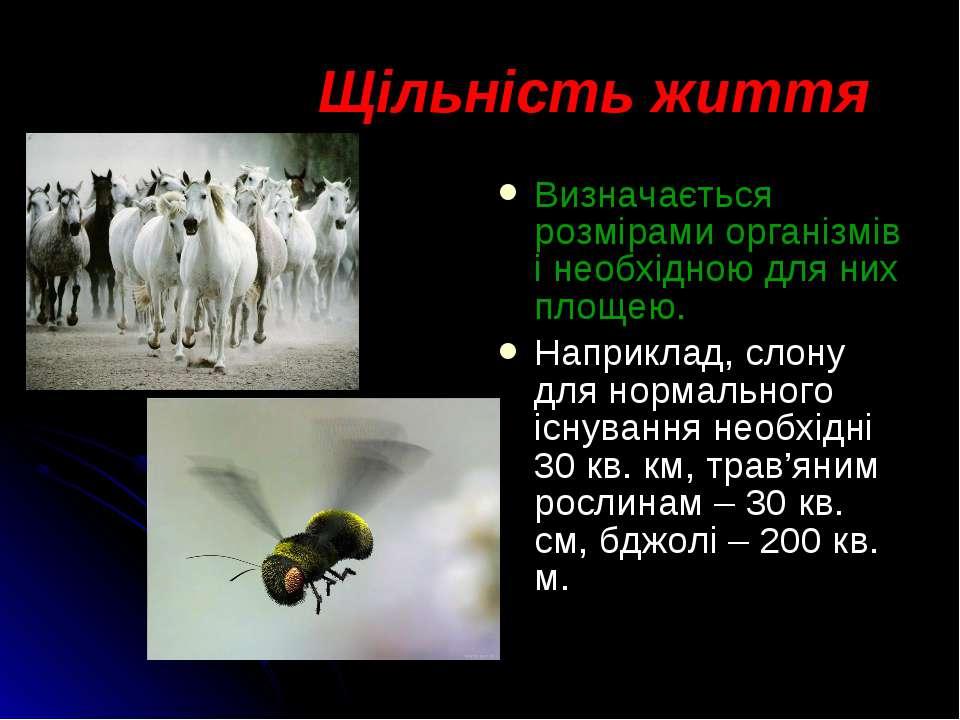 Визначається розмірами організмів і необхідною для них площею. Наприклад, сло...