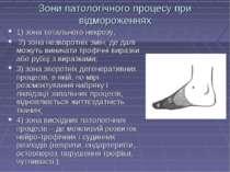 Зони патологічного процесу при відмороженнях 1) зона тотального некрозу, 2) з...