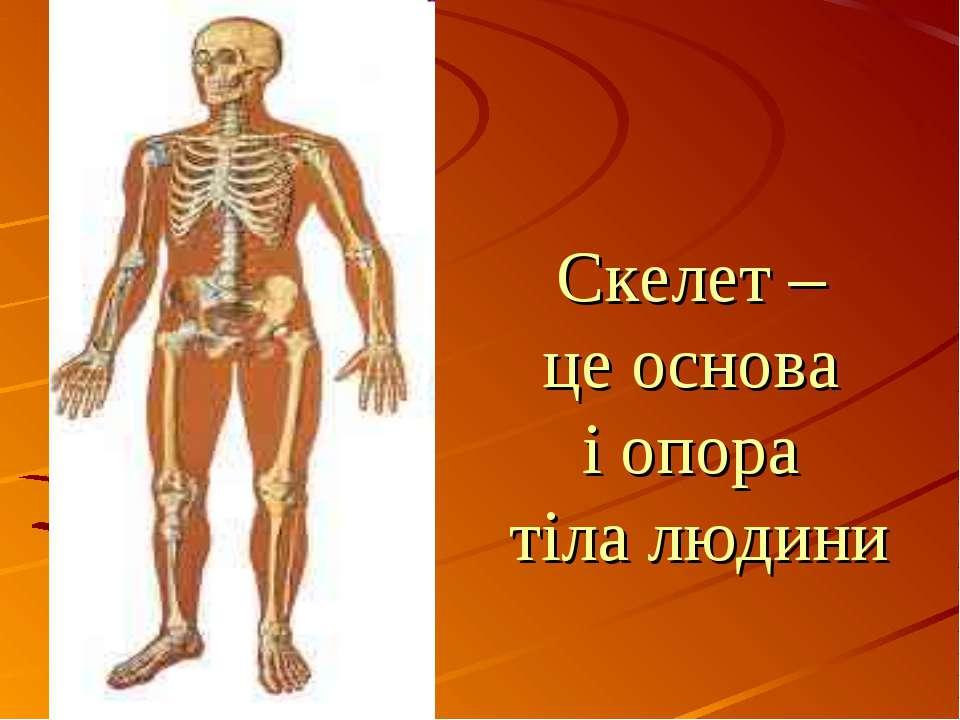 Cкелет – це основа і опора тіла людини