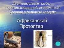 Двоякодышащая рыба, переживающая неблагоприятные условия в глиняной капсуле А...
